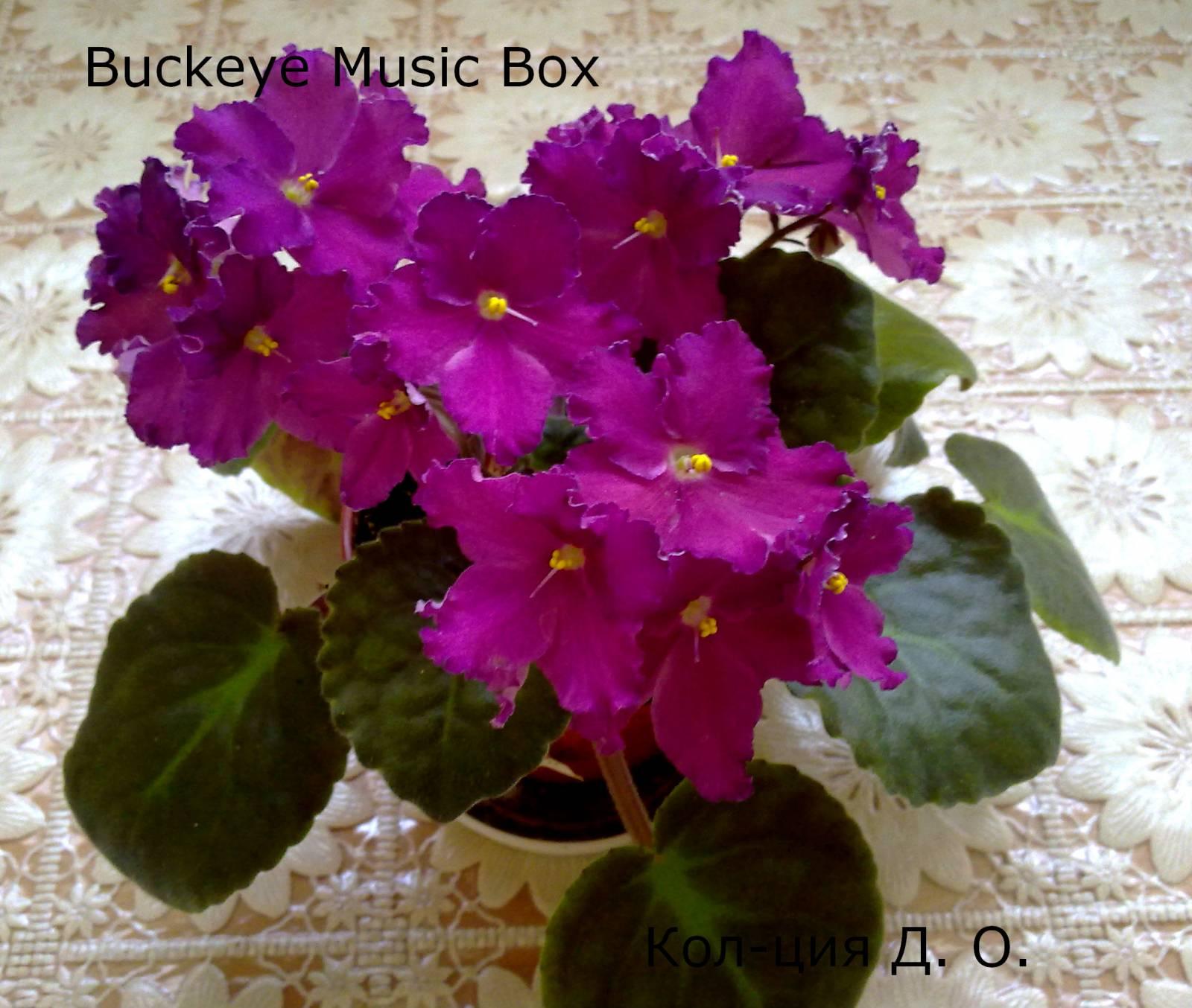 Фиалка подарок для любимой фото и описание